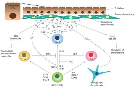Mucosal Cytokine Network In Inflammatory Bowel Disease