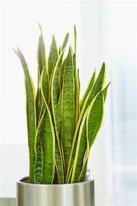 Welche Pflanzen Vertragen Sich Tabelle : hydrokultur holt das beste aus zimmerpflanzen heraus das ~ Lizthompson.info Haus und Dekorationen