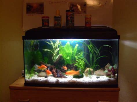 poisson dans un aquarium combien de poisson dans un aquarium de 60l 28 images combien de cardinalis dans un aquarium