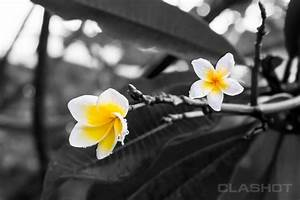 Black And White Photography With Color Splash Nature | www ...