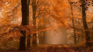 Wallpaper, Sunlight, Landscape, Forest, Fall, Leaves, Nature, Branch, Mist, Dirt, Road