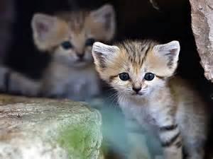 Rare Cute Exotic Animals
