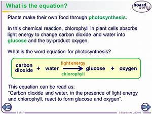 Plants and photosynthesis - ppt video online download