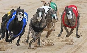 Florida Legislature weighs dog-racing laws - Orlando Sentinel