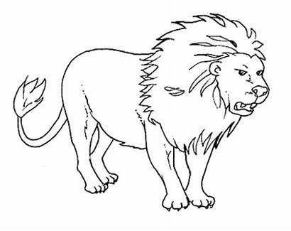Coloring Pages Animal Animals Realistic