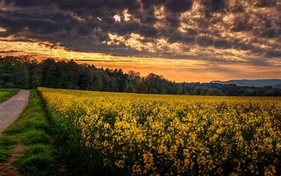 8k 4k Sunset Meadows 5k Wallpapers Field