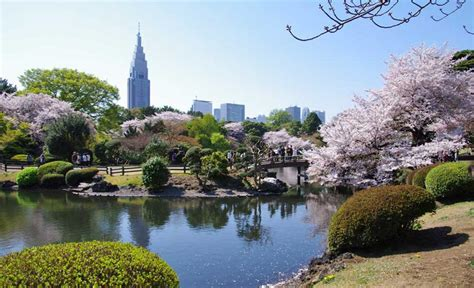 shinjuku gyoen national garden in tokyo 12 reviews and 64