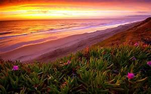Beach, Ocean, Sunset, Plant, Flowers, Shore, Coast, Sea, Waves, Sky, Clouds, Landscapes, Hills