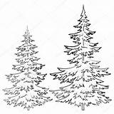 Pine Tree Drawings Drawing Coloring Pencil Sketch Outline Forest Clipart Sketches Wood Sketchite Burning sketch template