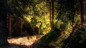 Dark Pine Forest Wallpaper | www.pixshark.com - Images ...