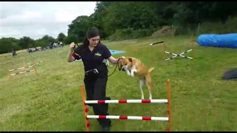Enfield Dog Training Primo Pet Services Enfield Dog
