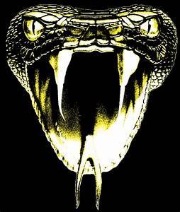 Kobe Bryant Black Mamba Logo wallpaper 246237