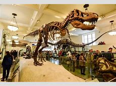 The New York FREE museums, cultural centers, zoo's