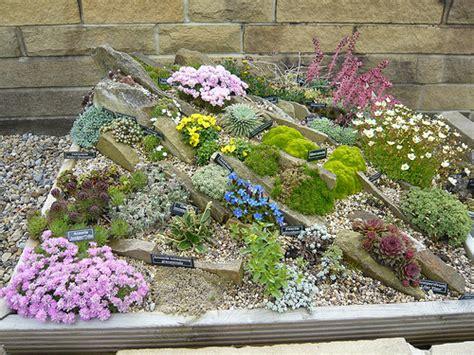 rockery plants in a rock box gardeners tips