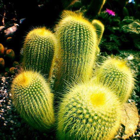 immergrüne sträucher winterhart sonnig exotische winterharte pflanzen sukkulenten im garten tropische pflanzen bringen einen hauch
