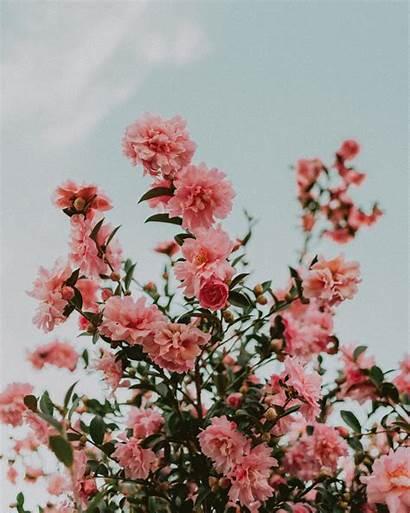Flower Aesthetic Floral Iphone Wallpapers Coolcarsblog Floyd