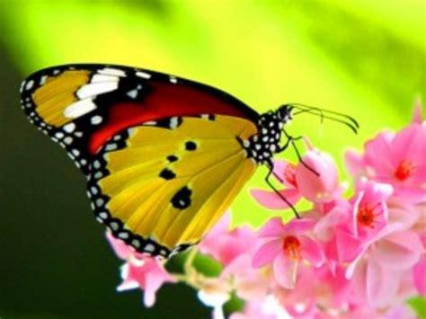 Hình ảnh Những Loài Bướm đẹp Nhất Thế Giới