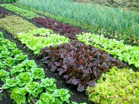 organic garden soil 5 tips to help your garden thrive during a drought the