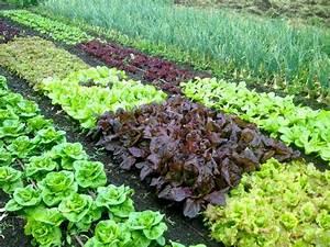 Garden safe organic vegetable garden soil home inspirations for Best organic soil for vegetable garden