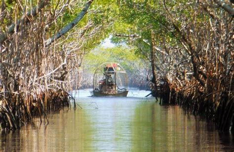 Which Everglades Airboat Tour Is The Best by Florida S Best Airboat Tours The Secrets Of The Everglades