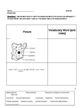 middle school biology science worksheet life processes vocabular worksheet