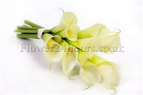 calla care uk calla lily care flowers blog flowers tips and advice from london florist