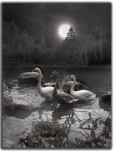 moonlight swim amazing pictures amazing travel
