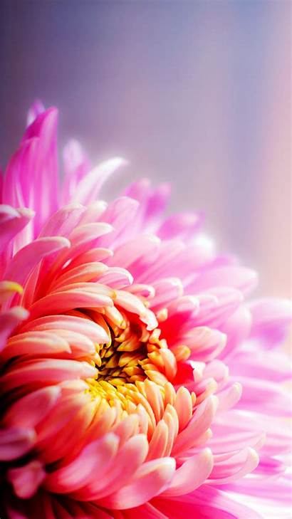 Floral Pink Android Phone Phones Mobile Wallpapers