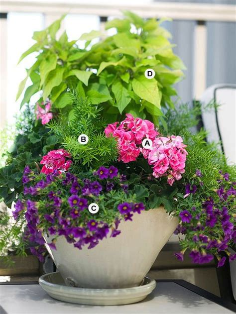 perfect flower containers   geraniums landscaping
