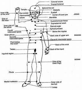 Human Body Pressure Points Diagram
