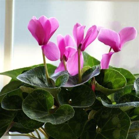 plante d interieur fleurie plante fleurie d int 233 rieur liste ooreka