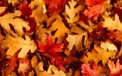 Leaves Autumn Wallpapers Beckground Fall Desktop Backgrounds