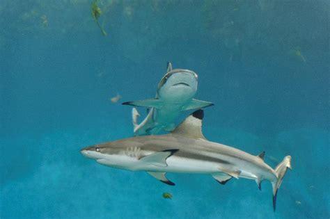 aquarium de lyon adresse aquarium de lyon activit 233 pour enfant la mulati 232 re 69350 adresse horaire et avis