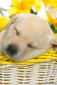 Cute Puppy Spring