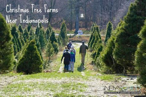 christmas tree farms near indianapolis indy s child
