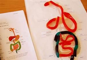 Ol Mother Hubbard  Science Fun 5 Digestive System