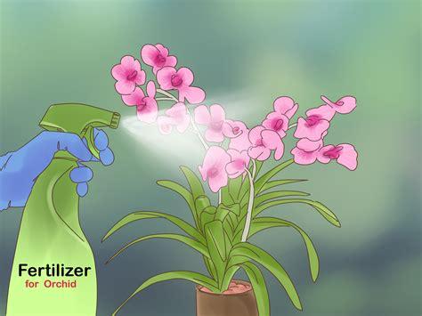 ways  grow vanda orchids wikihow
