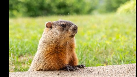 The song introduces the audience to nancy taylor, a woman whom phil … Groundhog Day: The Musical ~ Medley cover - YouTube