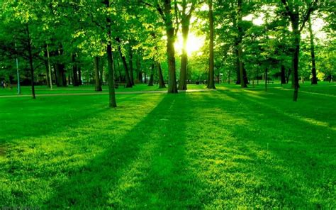 3d Green Nature Wallpaper by 10 Best Wallpaper Hd 1080p 3d Nature Hd 1080p For Pc