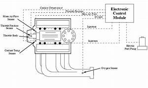 Gm Ecm Tpi Wiring Diagram  Gm  Free Engine Image For User