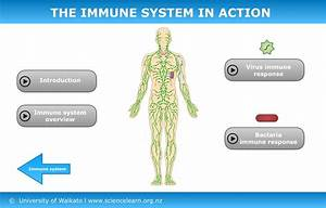 The Immune System In Action  U2014 Science Learning Hub