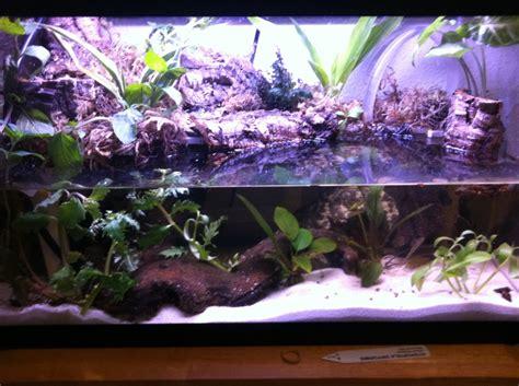 gallon paludarium build aquarium advice aquarium