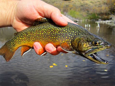 8 Common Mistakes Anglers Make Fighting Trout