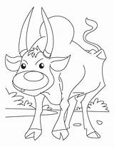 Ox Coloring Pages Jog Ready sketch template