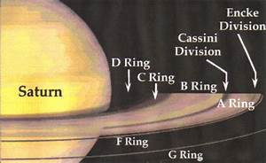 rings jewelry accessories   Civilized Wildlife