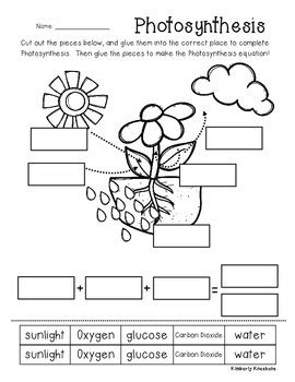 Photosynthesis Posterclassroom Display And Worksheet By Beached Bum Teacher