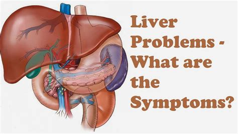 Liver In Human Body Pain  Anatomy Organ