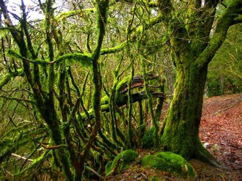 siege bloom excursión por slieve bloom en irlanda viajablog