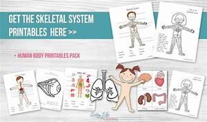 Skeletal System Worksheets For Kids