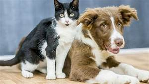 Vegan Dogs And Cats  Study Finds Some Pet Owners Are